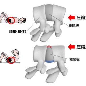 腰椎 頸椎 椎間板 椎間板ヘルニア 腹筋 トレーンニング