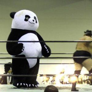 アンドレザジャイアントパンダ 巨大パンダレスラー